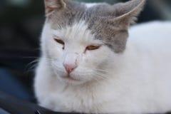 Cat Potrait. Istanbul, Turkey Stock Images
