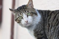 Cat Potrait. Istanbul, Turkey Stock Photo