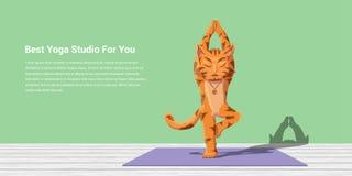 Cat practice yoga Royalty Free Stock Photo