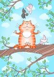 Cat practicing yoga Royalty Free Stock Photos