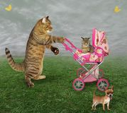 Cat with a pram and a dog