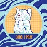 Cat Pray Stock Photo