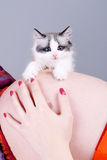 Cat on the pregnant woman's belly Stock Photos