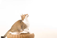 Cat prepare for jumping Stock Image