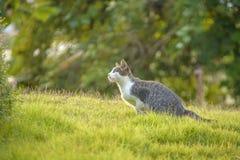 Cat prepare to jump. From green garss Stock Photo