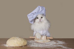 Cat prepares the dough for baking. Royalty Free Stock Photo