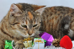 Cat and the present Royalty Free Stock Photo