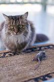 Cat presenting dead mouse to family Royalty Free Stock Photo
