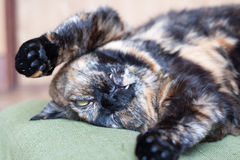 Cat pretending dead Stock Images