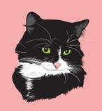 Cat1 preto Imagens de Stock Royalty Free