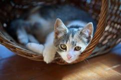 Cat pretty. Basket background siesta Royalty Free Stock Photo
