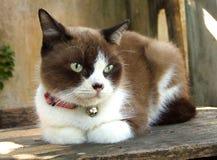 Cat pretty Stock Photography