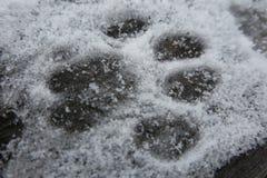 Cat Print in de Sneeuw Royalty-vrije Stock Afbeeldingen
