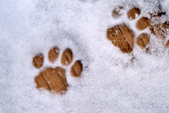 Cat Prints in Snow. Cat paw prints in snow on wood stock photo