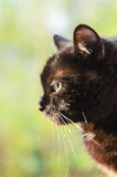 Cat Profile Photo stock