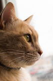 Cat Profile Royaltyfri Foto