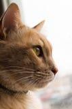Cat Profile Royaltyfri Foto