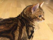 Cat Profile Stockfotografie