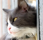 Cat profile. The profile of a kitty stock image