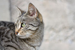 Cat Profile Stock Images