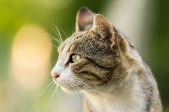 Cat Profile Portrait Imagenes de archivo