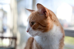 Cat Profile Royalty Free Stock Photos