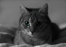 Cat profile with selective color. A beautiful cat with groovy eyes shows strength. This could be motivating and make you think a little Stock Photo