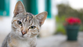 Cat profile - staring. Curious cat looking straight at you Royalty Free Stock Image