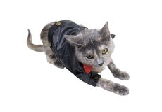 Cat on the prowl. Wearing a black leather coat that goes with every outfit - path included Stock Image
