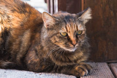 A cat on the prowl. Photo shows a cat on the prowl Royalty Free Stock Image