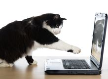 Cat pulls a paw to the laptop. The cat pulls a paw to the laptop screen royalty free stock images
