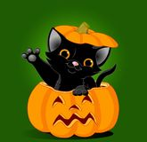 Cat in pumpkin. Black kitten jumping out from a Halloween pumpkin. Background is separate stock illustration
