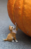 Cat and pumpkin Stock Photo