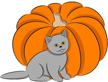 Cat and pumpkin Royalty Free Stock Images