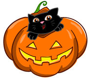 Cat and Jack o Lantern  Royalty Free Stock Image