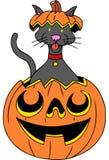 Cat in Pumpkin Stock Photos