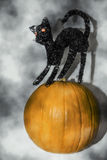 Cat on the Pumpkin Royalty Free Stock Image
