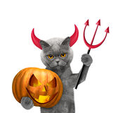 Cat with pumpkin in devils costume for Halloween Stock Photos