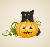 Cat and pumpkin Royalty Free Stock Photos