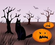 Cat and Pumpkins Royalty Free Stock Photography