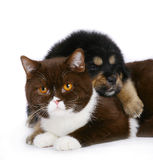 Cat and puppy. On white background stock image