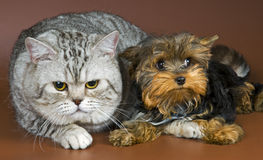 Cat and puppy. Studio on a neutral background royalty free stock photography