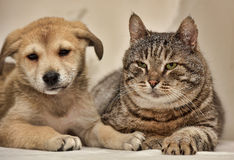 Cat and puppy Stock Images