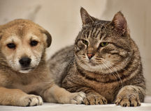 Cat and puppy Stock Photos