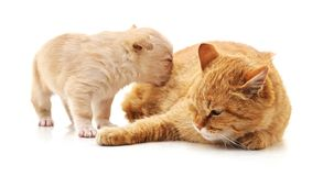 Cat and puppy. On a white background royalty free stock image