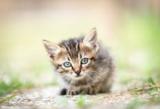 A cat-puppy look. Carefully royalty free stock images