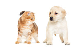 Cat and puppy looking Stock Image