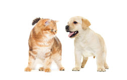 Cat and puppy looking Royalty Free Stock Photos