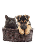 Cat and puppy Royalty Free Stock Photos