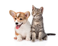 Cat and puppy sitting in front. isolated on white background Royalty Free Stock Images